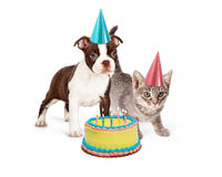 Perrito y Kitten With Birthday Cake Imagen de archivo libre de regalías