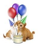 Perrito y Kitten Birthday Party Imagen de archivo