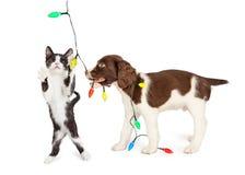 Perrito y Kitten Playing With Christmas Lights Imagen de archivo libre de regalías