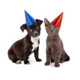 Perrito y Kitten Wearing Party Hat Imagen de archivo