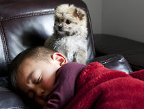 Perrito y muchacho vigilantes Foto de archivo