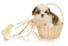 Perrito y polluelo lindos del bebé Imagenes de archivo