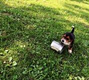 Perrito y su comida Imagen de archivo libre de regalías