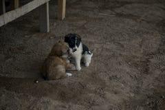 perritos fotos de archivo