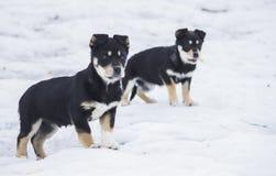 perritos fotografía de archivo