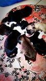 perritos Foto de archivo