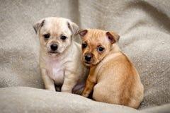 perritos Imágenes de archivo libres de regalías