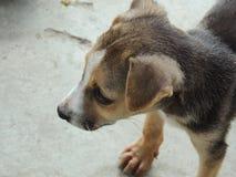 perritos Fotografía de archivo libre de regalías