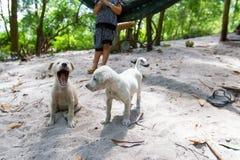 Perritos adorables del golden retriever en la playa fotografía de archivo libre de regalías