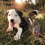Perritos blancos y negros Foto de archivo libre de regalías