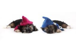 Perritos cansados con los sombreros que mienten en el piso fotos de archivo