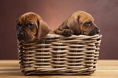 Perritos, cesta de mimbre Imágenes de archivo libres de regalías