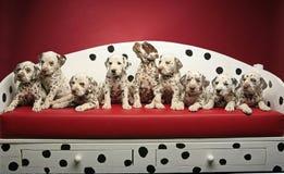 Perritos dálmatas en un banco Foto de archivo