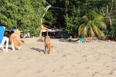 Perritos de la playa foto de archivo