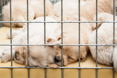 Perritos dentro de una jaula para la venta Fotos de archivo