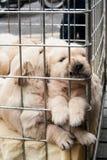 Perritos dentro de una jaula para la venta Foto de archivo libre de regalías