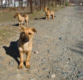 Perritos en el camino Imagen de archivo libre de regalías