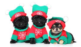 Perritos en trajes de la Navidad Fotos de archivo