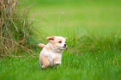 Perritos felices Imágenes de archivo libres de regalías