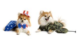 Perritos patrióticos Imágenes de archivo libres de regalías