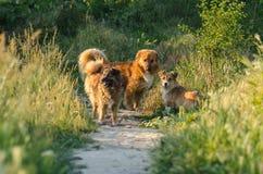 Perritos perdidos en un jardín Foto de archivo libre de regalías