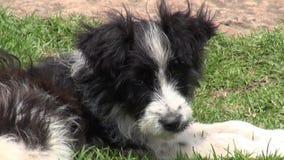Perritos, perros, colmillos, animales domésticos, animales almacen de metraje de vídeo