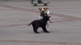 Perritos, perros, colmillos, animales domésticos, animales metrajes