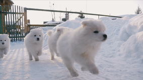 Perritos que corren en la nieve
