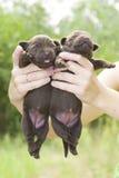Perritos recién nacidos Imagen de archivo libre de regalías