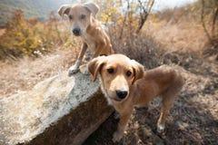 Perritos sin hogar y hambrientos foto de archivo