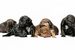 Perritos Snuggling Imagen de archivo libre de regalías