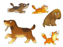 Perritos y gatitos Imagenes de archivo