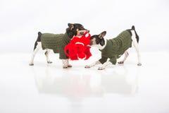 Perritos y perro relleno rojo Imagen de archivo