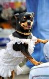 Perro imágenes de archivo libres de regalías