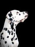 Perro Fotografía de archivo libre de regalías