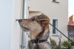 Perro Fotos de archivo