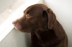 Perro Foto de archivo libre de regalías
