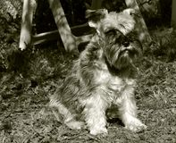 Perro fotos de archivo libres de regalías