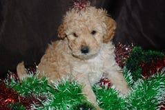 Perro, Año Nuevo Imágenes de archivo libres de regalías