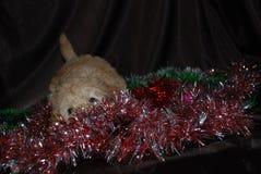 Perro, Año Nuevo Fotos de archivo