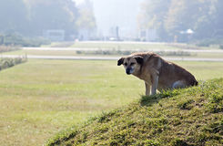 Perro abandonado Foto de archivo