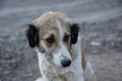 Perro abandonado Fotografía de archivo