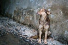 Perro abandonado Imagenes de archivo
