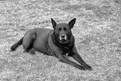 Perro abandonado con mirada curiosa Imágenes de archivo libres de regalías