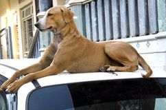 Perro abandonado de la calle Imagen de archivo