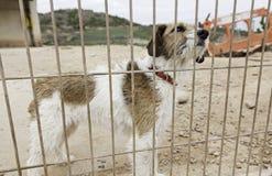 Perro abandonado detrás de barras Imagen de archivo