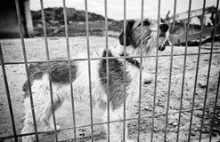 Perro abandonado detrás de barras Imagen de archivo libre de regalías