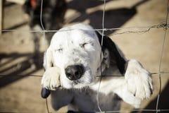 Perro abandonado detrás de barras Fotografía de archivo libre de regalías
