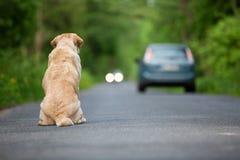 Perro abandonado en el camino Imagen de archivo