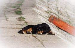 Perro abandonado pacífico que duerme en la calle fotos de archivo
